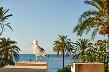vacances au royal westminster - menton